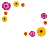 Daisy Flower Background Stock Photography