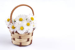 Daisy flower basket Royalty Free Stock Photos