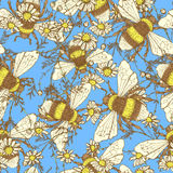 Daisy flower and bees. Vector seamless pattern Royalty Free Stock Images