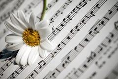 Daisy Flower bianca su musica nota lo strato fotografia stock libera da diritti