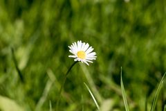 Daisy flower. With a blank space for text Stock Photos