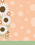 Daisy Flower Border Royalty Free Stock Photography