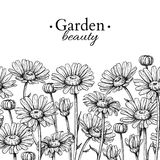 Daisy flower border drawing. Vector hand drawn engraved floral seamless pattern. Chamomile black Stock Photography