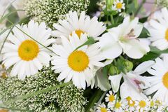 Daisy flower bouquet Royalty Free Stock Photo