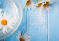 Daisy flower in a bowl on the blue background, top view. Royalty Free Stock Images