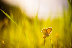 Daisy flower butterfly sunrise sunset toned photo selective focus Stock Images