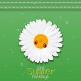 Daisy Flower Camomilla Migliori vacanze estive Fotografia Stock