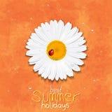Daisy Flower Camomilla Migliori vacanze estive Fotografia Stock Libera da Diritti