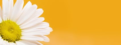 Blank Text Card With Daisy Flower royalty free stock images