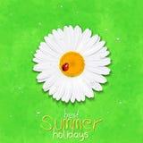 Daisy flower. Chamomile. Best Summer holidays royalty free stock photos