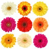 Daisy Flower Collection Royalty Free Stock Images