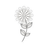 Daisy flower decoration line Royalty Free Stock Image