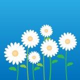 Daisy Flower In Decorative Stock blanca Fotografía de archivo