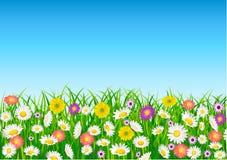 Daisy flower field Stock Photos