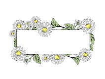 Daisy Flower Frame With Copyspace. Daisy Flower Border With Copyspace Over White Royalty Free Stock Image