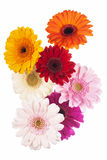 Daisy flower gerbera bouquet isolated Stock Images