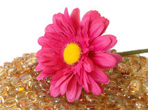 Daisy Flower With Glass Stones Stock Images