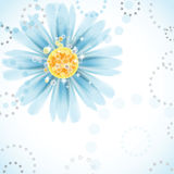 Daisy flower. Royalty Free Stock Image