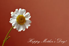 Daisy flower and Happy Mothers day text Stock Image