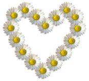 Daisy Flower Heart Imágenes de archivo libres de regalías