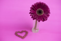 Daisy flower. And heart of candies Royalty Free Stock Photo