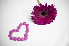 Daisy flower. And heart of candies Stock Photography