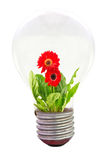 Daisy flower inside the light bulb Stock Photography