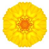 Daisy Flower Isolated concéntrica amarilla en blanco. Mandala Design Imagen de archivo