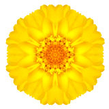 Daisy Flower Isolated concêntrica amarela no branco. Mandala Design imagem de stock