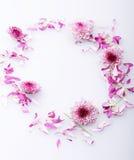 Daisy flower Royalty Free Stock Photography
