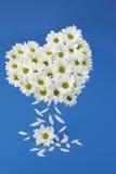 Daisy Flower Love Heart lizenzfreies stockfoto