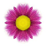 Daisy Flower Mandala Isolated caleidoscopica porpora su bianco Fotografie Stock Libere da Diritti