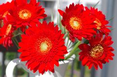 Daisy flower. One red daisy flower with a bucket on the background stock photos