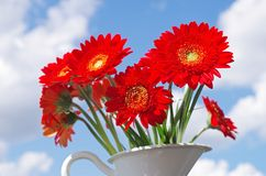Daisy flower. One red daisy flower with a bucket on the background royalty free stock image