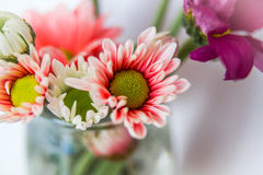 Daisy Flower Orange. Orange Daisy Flower made in studio with fill flash Royalty Free Stock Image