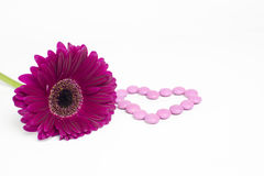 Daisy flower. Pink daisy flower and heart of candies Royalty Free Stock Image