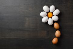 Daisy flower shaped with eggs on black background. Daisy flower shaped with eggs royalty free stock photography