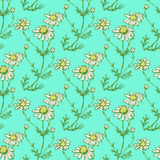 Daisy flower in sketch style Royalty Free Stock Images