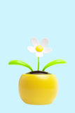 Daisy flower toy on blue. Daisy flower toy with green leaves in yellow flower pot isolated on blue background with copy space Stock Photos