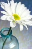 Daisy Flower in vaas Royalty-vrije Stock Afbeeldingen
