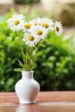 Daisy flower in the vase with shallow focus Stock Images