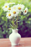 Daisy flower in the vase with shallow focus Stock Photos