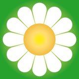 Daisy flower (vector). A daisy flower (cmyk to rgb Stock Image
