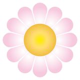 Daisy flower (vector). A daisy flower (cmyk to rgb Royalty Free Stock Images