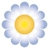 Daisy flower (vector). A daisy flower (cmyk to rgb Royalty Free Stock Photography