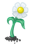 Daisy Flower Vector Illustration Royalty Free Stock Image