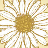 Daisy flower, vector sketch background Royalty Free Stock Images
