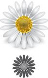 Daisy flower. A white daisy flower. Illustration contain transparencies and is saved as Illustrator 10 format Royalty Free Illustration
