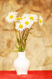 Daisy flower in white vase with shallow focus Stock Images