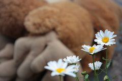 Daisy, Flower, White, Yellow Stock Image